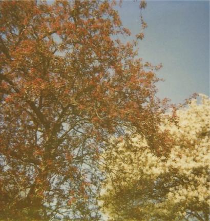 Spring Polaroid